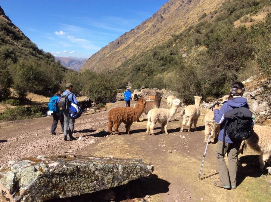Trek Lares Cusco to Machupicchu