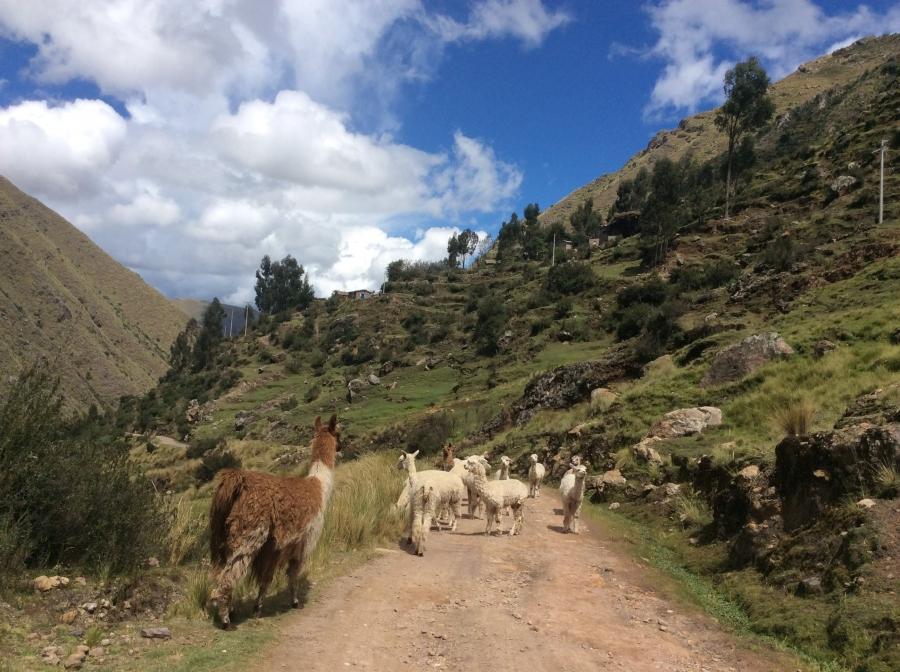 Ausangate trekking for 5 days in Peru