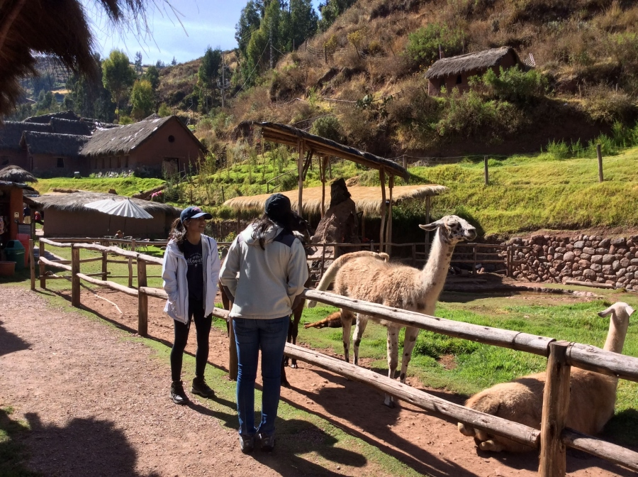 alpaca farming along the sacred valley tour in Peru