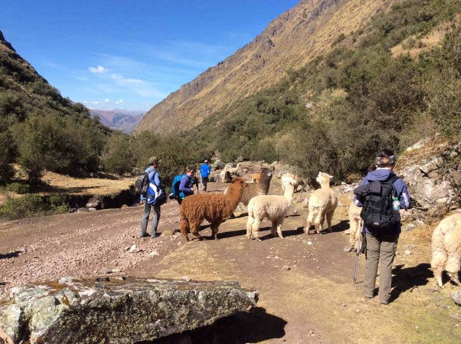 Lares trip to Machupicchu Peru