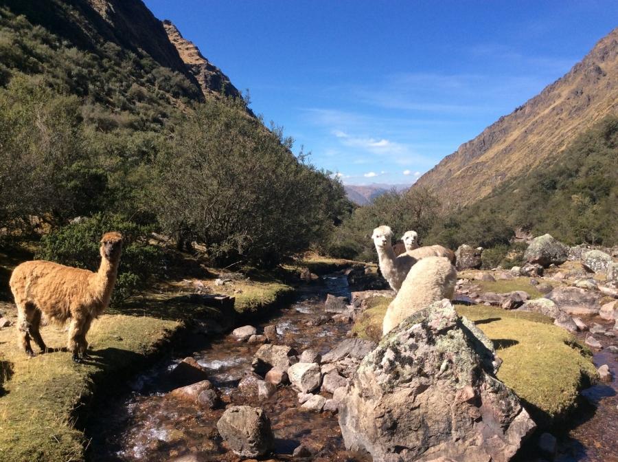 Lares trek Peru to Machupicchu