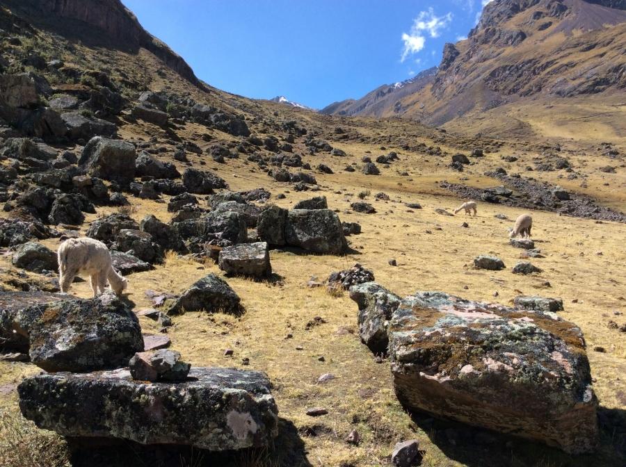 Lares trek adventure in Cusco to Machupicchu