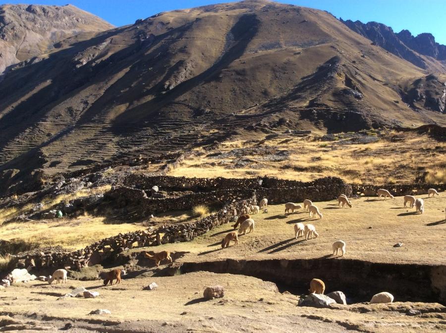 Ausangate trip in Cusco Peru