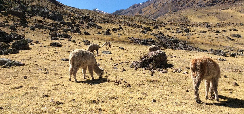 Lares valley biking in Peru