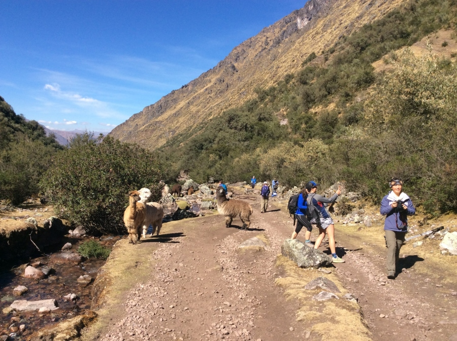 Lares trek Cusco with biking in Peru
