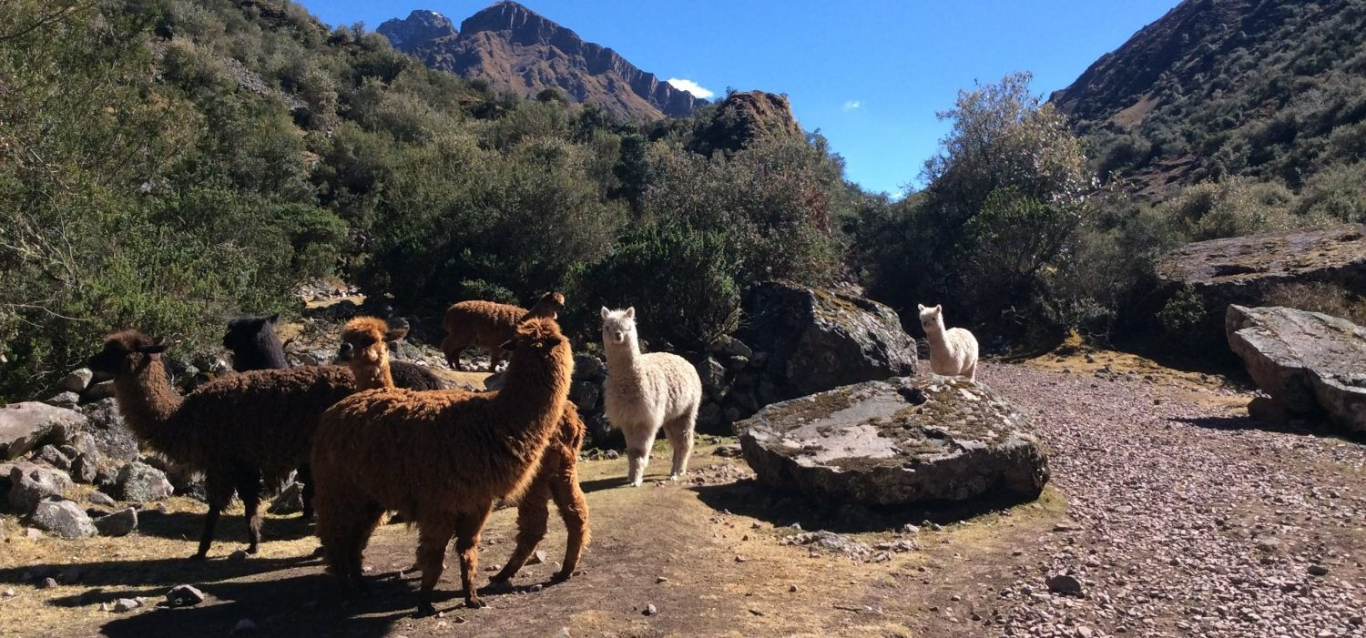day trip to Lares trek with car from Cusco
