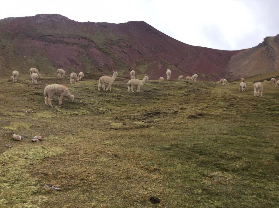 trekking Ausangate trail in Peru