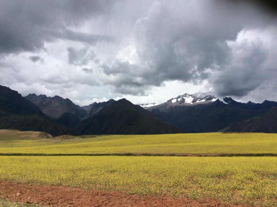 farming fields of Maras in experiental tourism