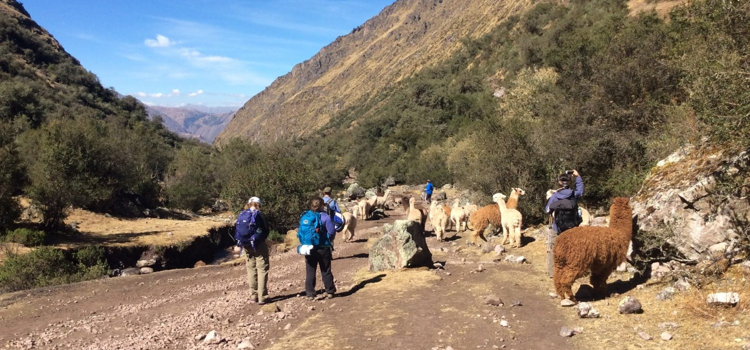 Treking Lares mountains in 3 days Peru