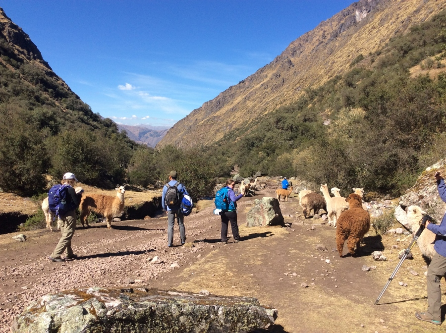 Lares trekking for 3 days Peru