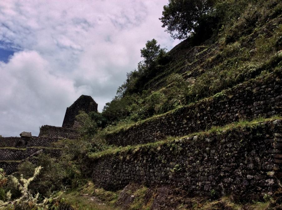 Huaynapicchu terraces view at Machupicchu