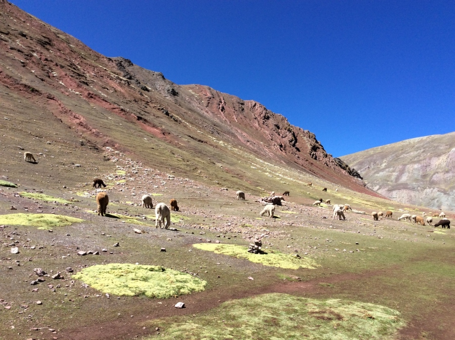 trekking rainbow mountain Peru
